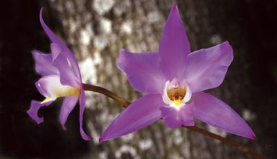 cam-426-flora3