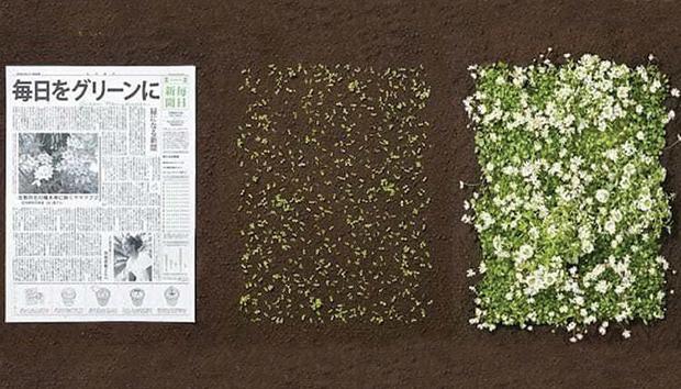 El papel del diario The Mainichi incluye semillas para que germinen una vez desechado