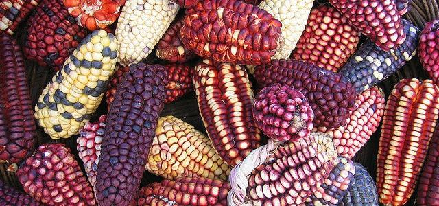México se ha convertido en un importador de maíz, aun cuando tiene todo para ser un país productor.